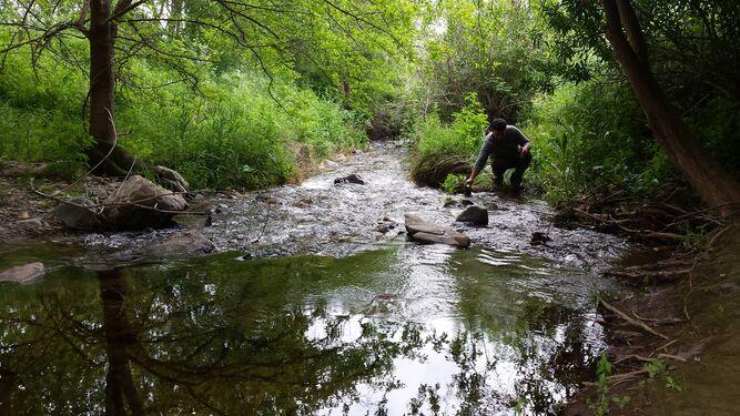 Arroyo Guadarroman aguas arriba, cauce natural. Las Cuevas
